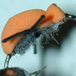 high visibility foam beetle fly pattern