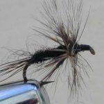 flightless black adams dry fly pattern